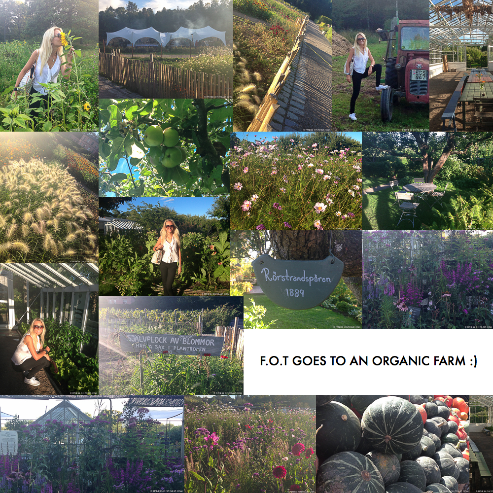 Fitness On Toast Blog Faya Organic Farm Healthy Food Nutrition Natural farming collage