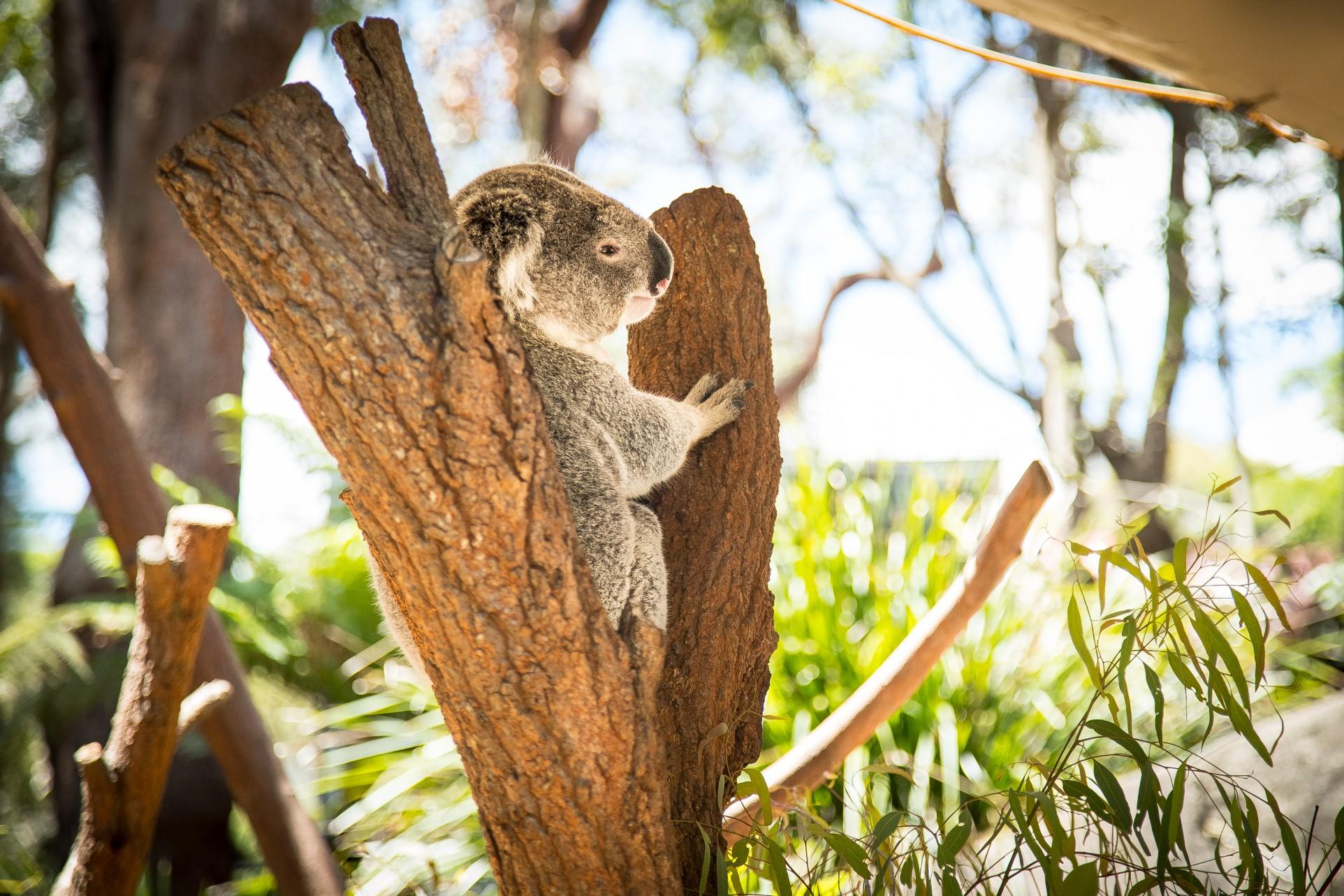 Fitness On Toast - Sydney Trip Faya Blog Girl Healthy Workout Travel Inspiration Australia Luxury Escape Wellness Wellbeing-8